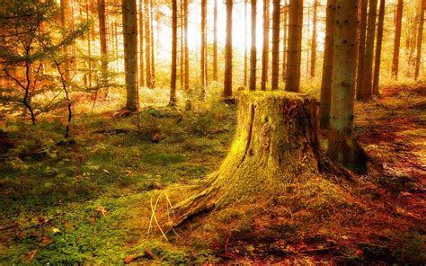 maerchenwald  gesaettigten und reichen farben des sommers
