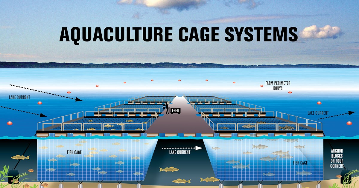 The causes and effects of the loss of marine biodiversity for Fish farming pros and cons