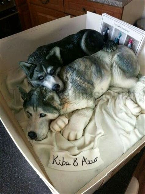 Husky cake by the cake illusionist   Cakes   Pinterest