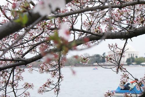 Spring in DC.