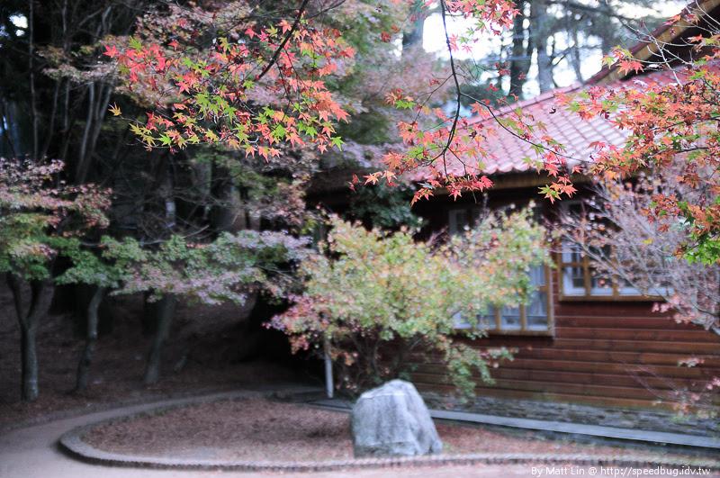 福壽山農場楓紅-2