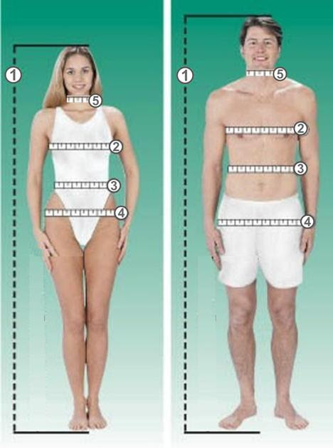 medir pecho, cadera, cintura, cuello y altura