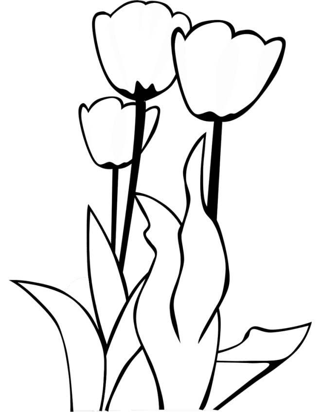 Stampa Disegno Di Fiori Tulipani Da Colorare