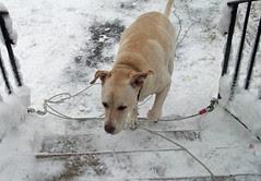 Zeus_SNOW_3212