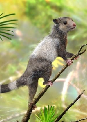 """""""Esquilos"""" viveram há pelo menos 208 milhões anos, no final do Triássico"""