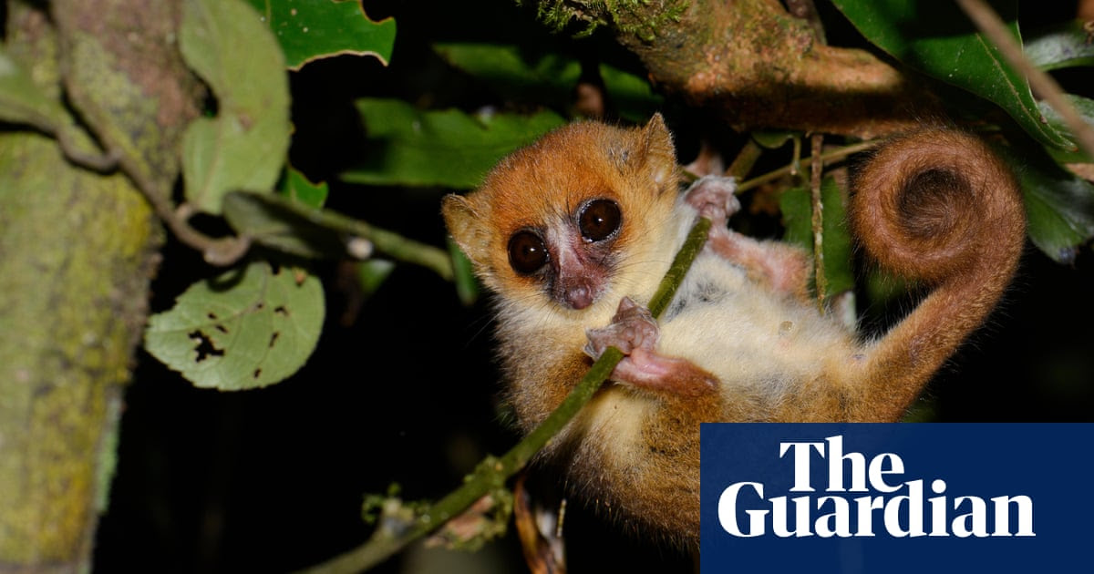 Lemurs and giant tortoises among species at risk if global warming reaches 3C