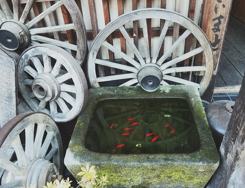 goldfish itsukushima
