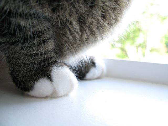 Santana paws
