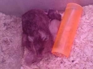 hamster family #1