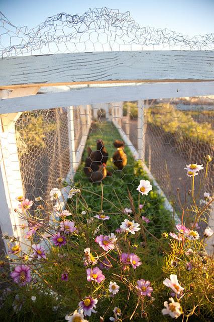 rooftop farm 2