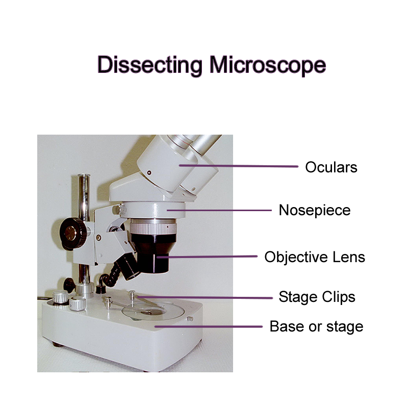 Dissecting Microscope Labeled Diagram - Micropedia