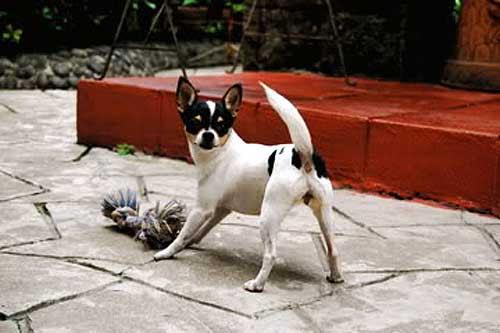 Empire of the Chihuahua: International Celebrities