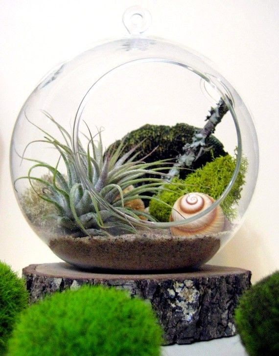 air plants planter ball