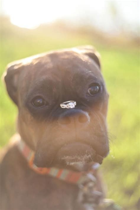 Best 25  Dog ring bearers ideas on Pinterest   Girl