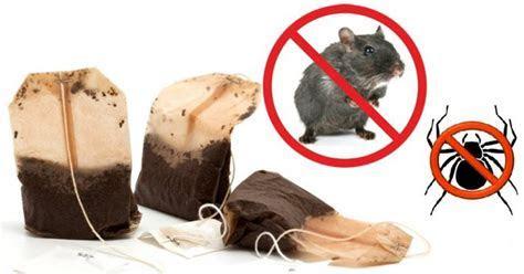 Als je 1 theezakje gebruikt, kom je nooit meer muizen of spinnen in je huis tegen ? Viralmundo