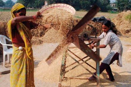 Stévia, riz basmati ou rooibos : mangez-vous les trésors de la biopiraterie ?