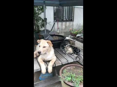 Harmonious picture ~ harmonious dog and cat! Mood change videos