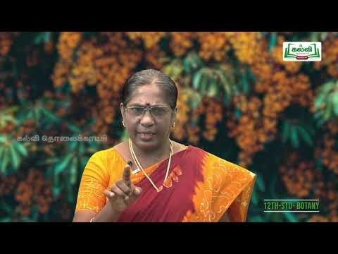 12th Botany பாரம்பரிய மரபியல் Kalvi TV