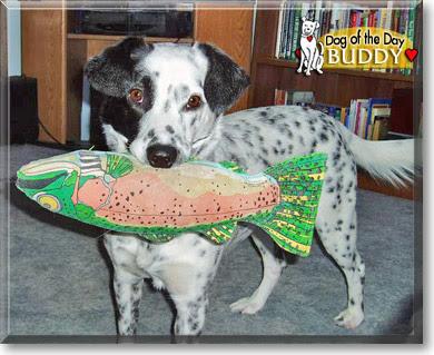 Buddy - Dalmatian, Blue Heeler - July 24, 2006
