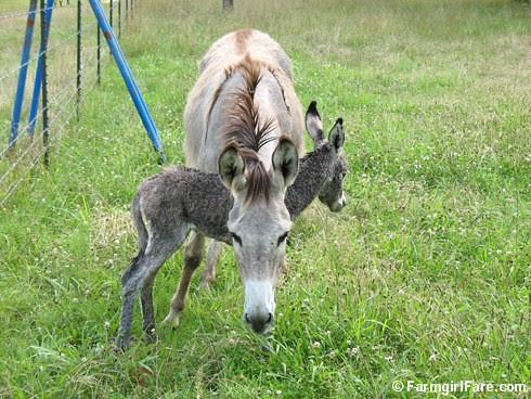 The Daily Donkey 55