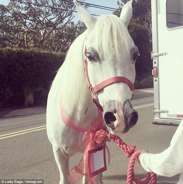 Special delivery:Lady Gaga is now the proud owner of a beautiful white horse after she received one of the most extravagant Christmas gifts one can imagine