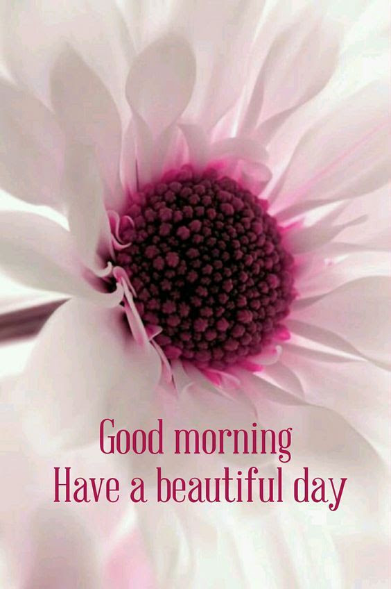 Good Morning Have A Beautiful Day Flower Quote Pictures Photos And