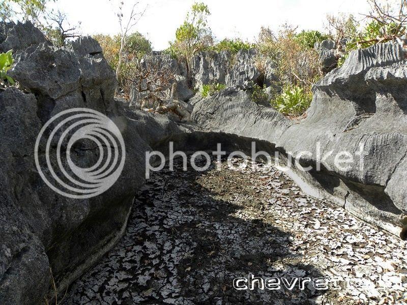 http://i1252.photobucket.com/albums/hh578/chevrette13/Madagascar/DSCN2192Copier_zps81692568.jpg