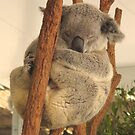 Sleepy Koala by Mike van der Hoorn