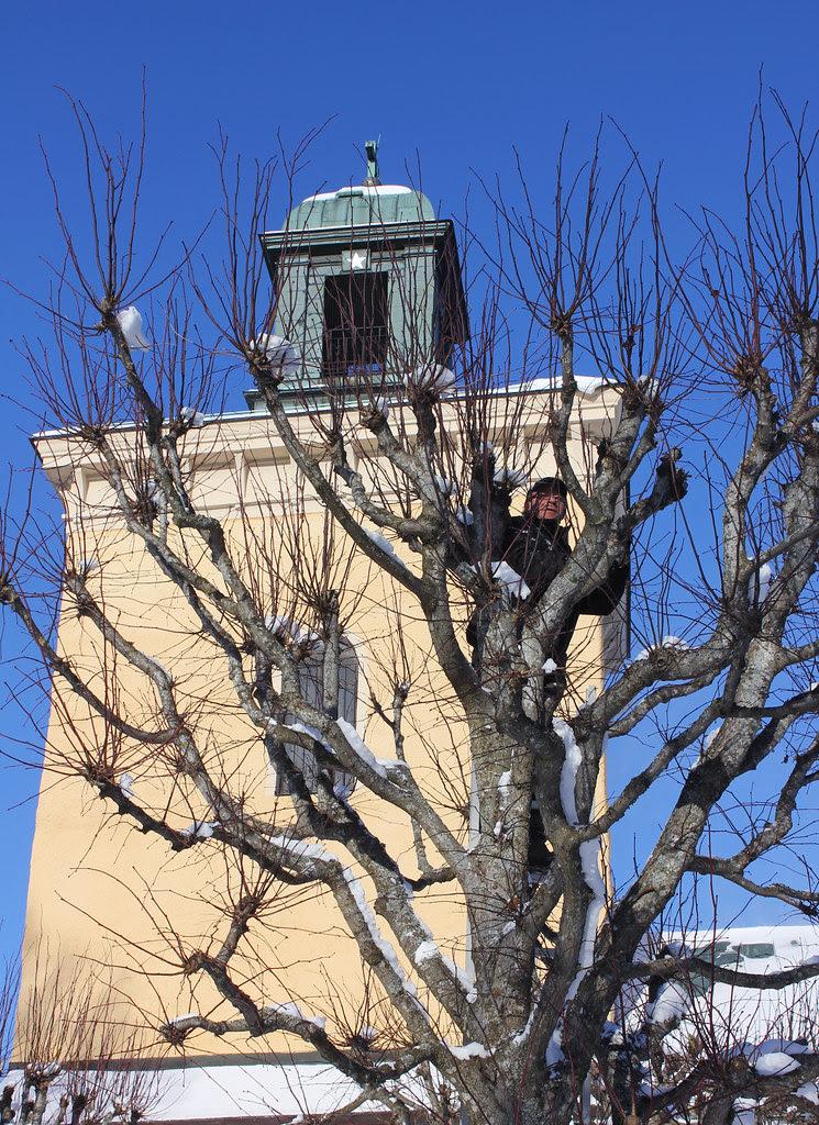 A man up a tree