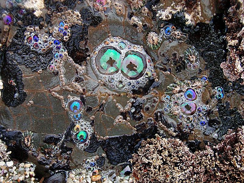 File:Tide pools bubbles.jpg