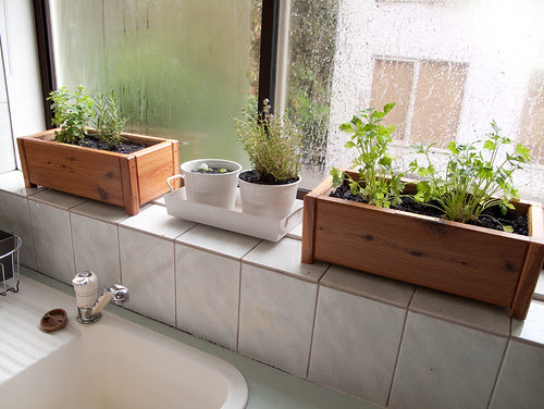 window boxes in my kitchen