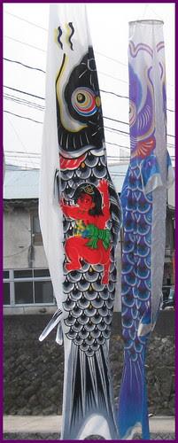 46 Momotaro Carp