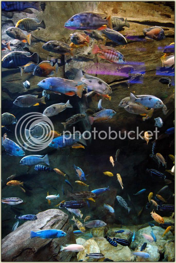 Fishies 01