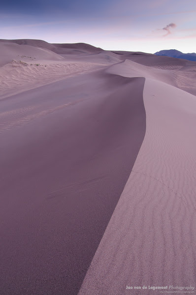 The purple dune