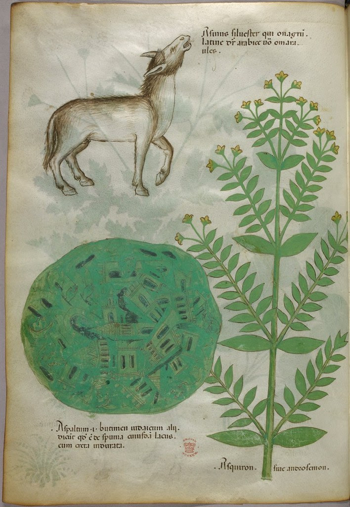 Medieval manuscript bestiary & herbal and map