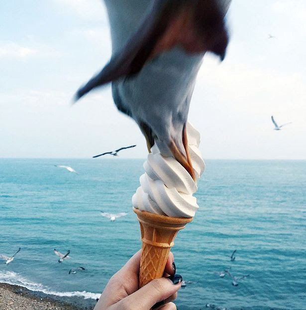 A student caught the moment a greedy gull swooped to grab a beakful of her seaside ice cream