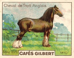 gilbert chevaux003