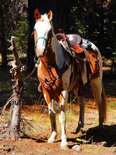IMG_7796 Horseback Riding to Corral Meadow, Lassen Volcanic National Park