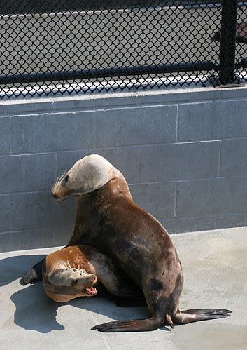 Sea lion argument
