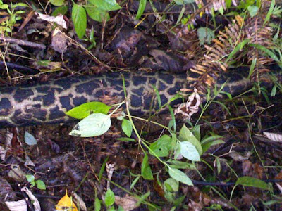 'Python on the trail'