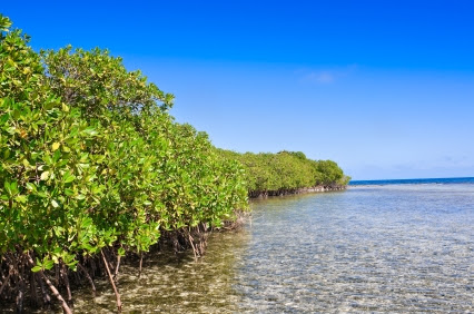 belize_mangroves_425