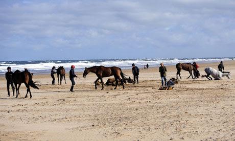 Racehorses on the beach