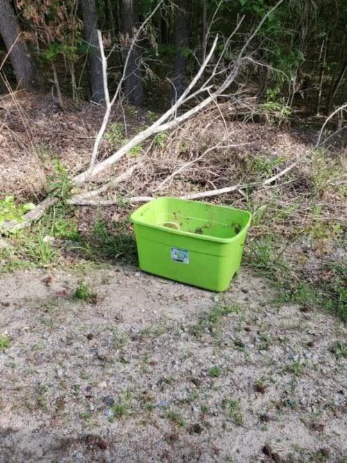 Encuentran una caja abandonada en pleno bosque, pero estaba repleta del más tierno amor
