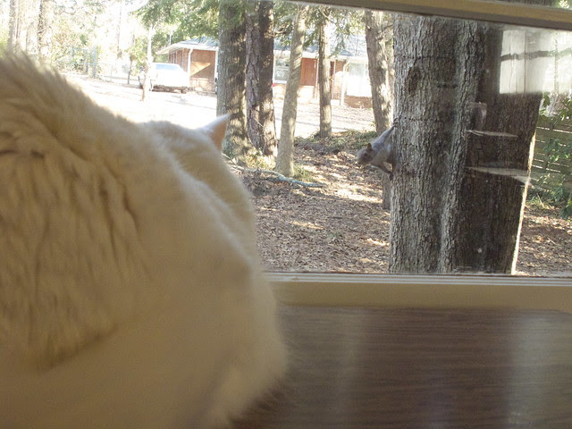 Nilla and the Squirrel 0024