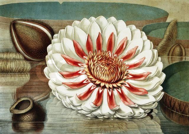 Charles Baudelaire Hymne à La Beauté Littérature