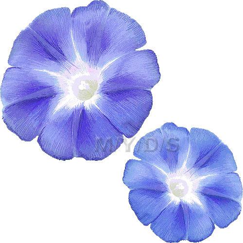 朝顔の花アサガオの花のイラスト条件付フリー素材集