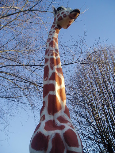giraffe again