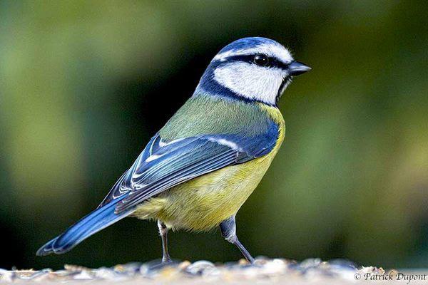 Les Oiseaux Du Jardin  Les Accueillir Les Reconnatre Et