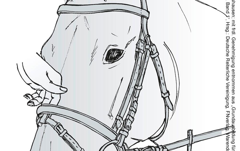 ausmalbilder pferde dressur  pin von eva gubik auf horses