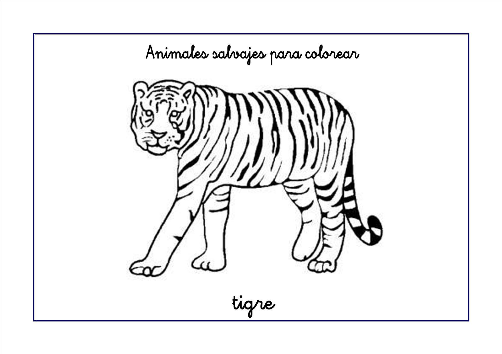 tigre colorear 300x212